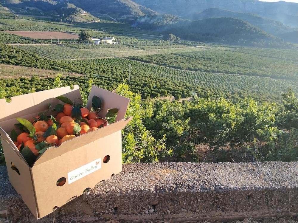 Naranjas de Mesa