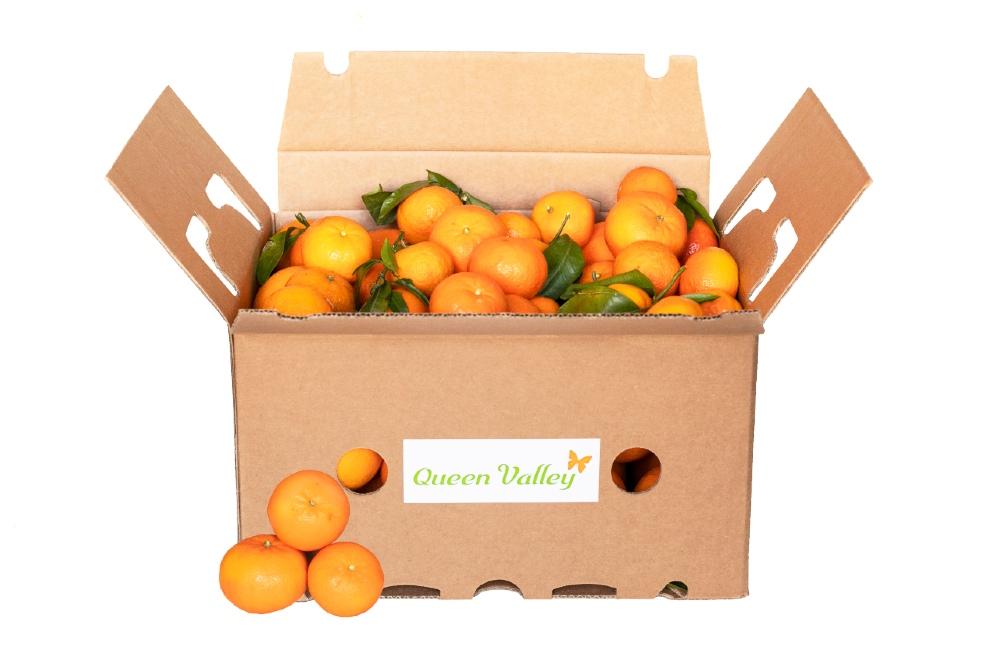 Mandarinas calidad extra