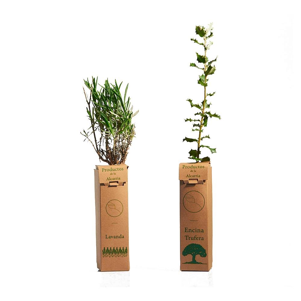 Pack de 2 Plantas - Encina de Trufa Negra + Lavanda