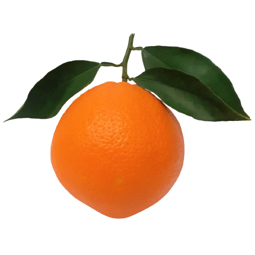 Naranjas de Mesa Seleccionada